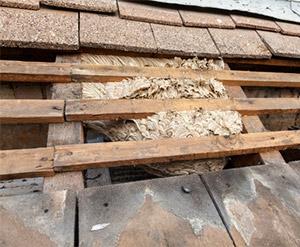 Hvepsebo gemt under tagkonstruktion