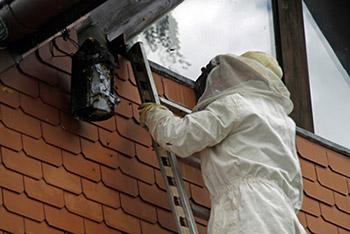 Professionel hvepsebekæmpelse kan være nødvendigt